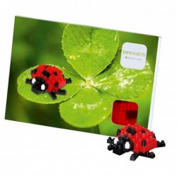 Brixies Postcard Ladybird...